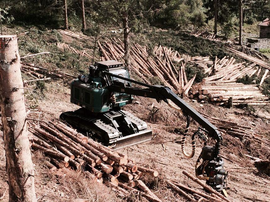 Depuis la tempête de 99 on a aussi beaucoup mécanisé la récolte des bois