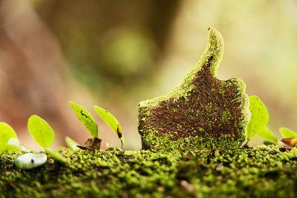 L'écologie sur les réseaux sociaux