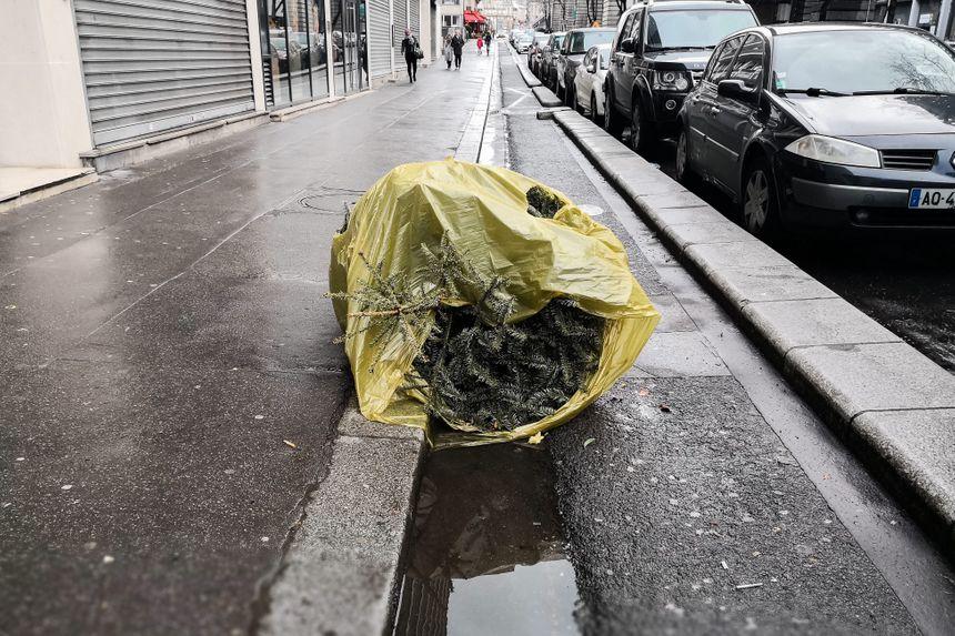 Sapins abandonnés dans la rue