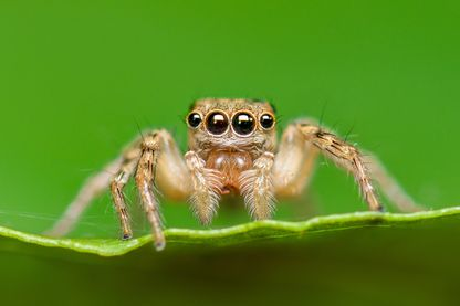 Effondrement des insectes : une hécatombe qui fait froid dans le dos aussi bien chez les espèces rares que les espèces abondantes.