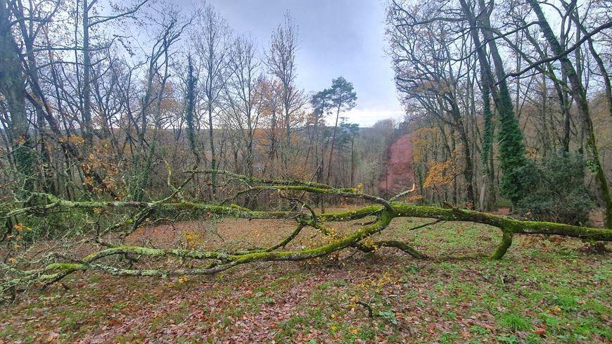 Le week-end du 14 et 15 décembre, de nombreux arbres sont tombés sur les routes et fils électriques en Dordogne (illustration)