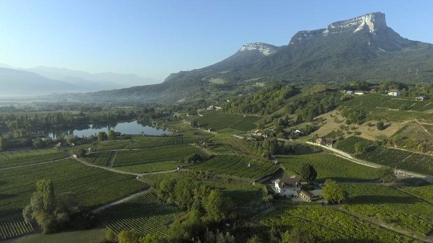 Vue aérienne du domaine viticole Perrier en Savoie.