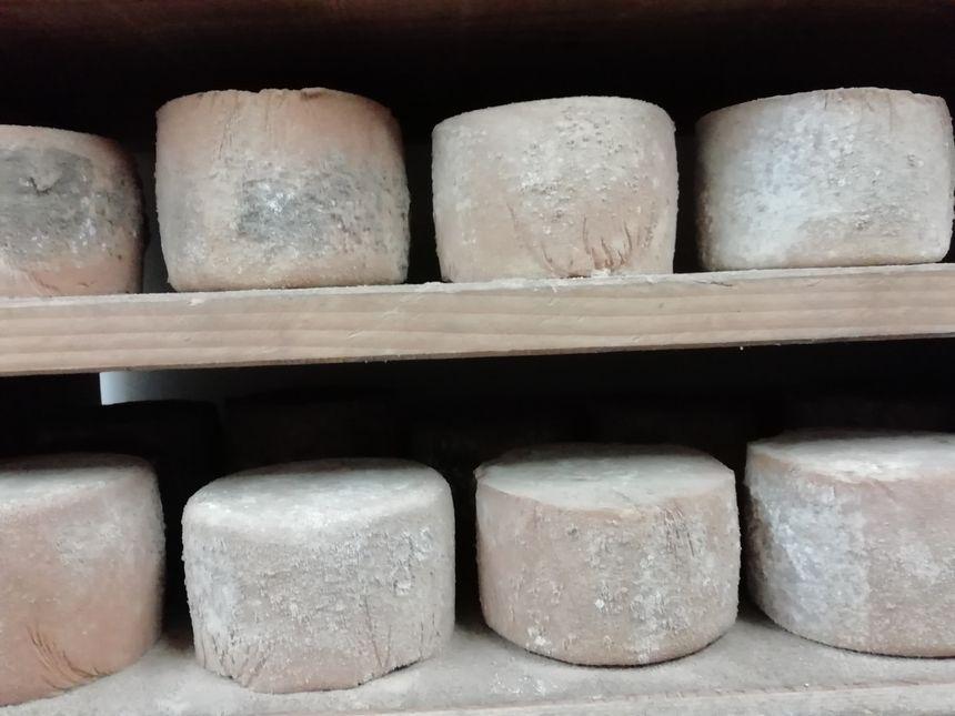 Fromages  de brebis bios en affinage à la Ferme Uhartetxeberria de Saint Pée sur Nivelle