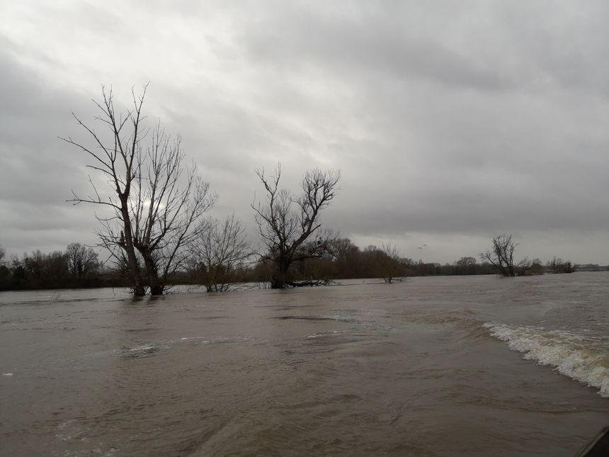 L'hiver, les îles de la Loire et les arbres qu'elles abritent sont largement immergés