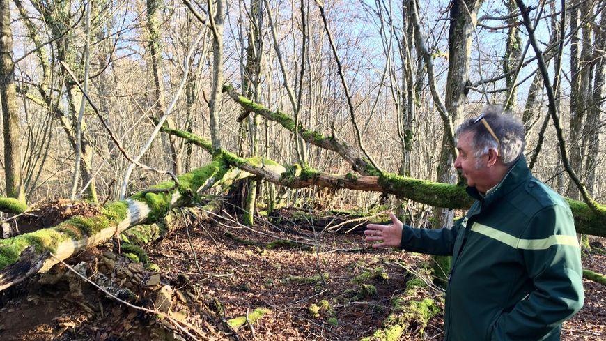 La réserve biologique de la forêt de Haye a gardé les séquelles de la tempête, vingt ans après.