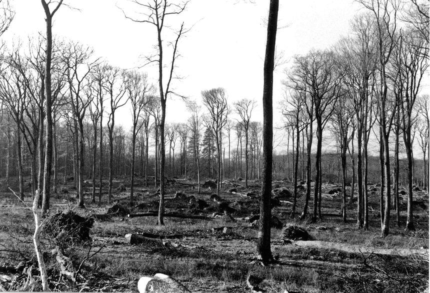Des centaines d'arbres couchés au sol en forêt de Bercé après la tempête de 1999