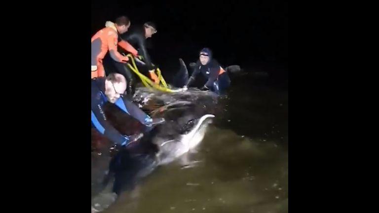 Un baleineau est échoué depuis hier matin à Kerlouan dans le nord Finistère.