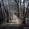 """Pochette pour """"Trust (audian remix) - Robag Wruhme"""""""
