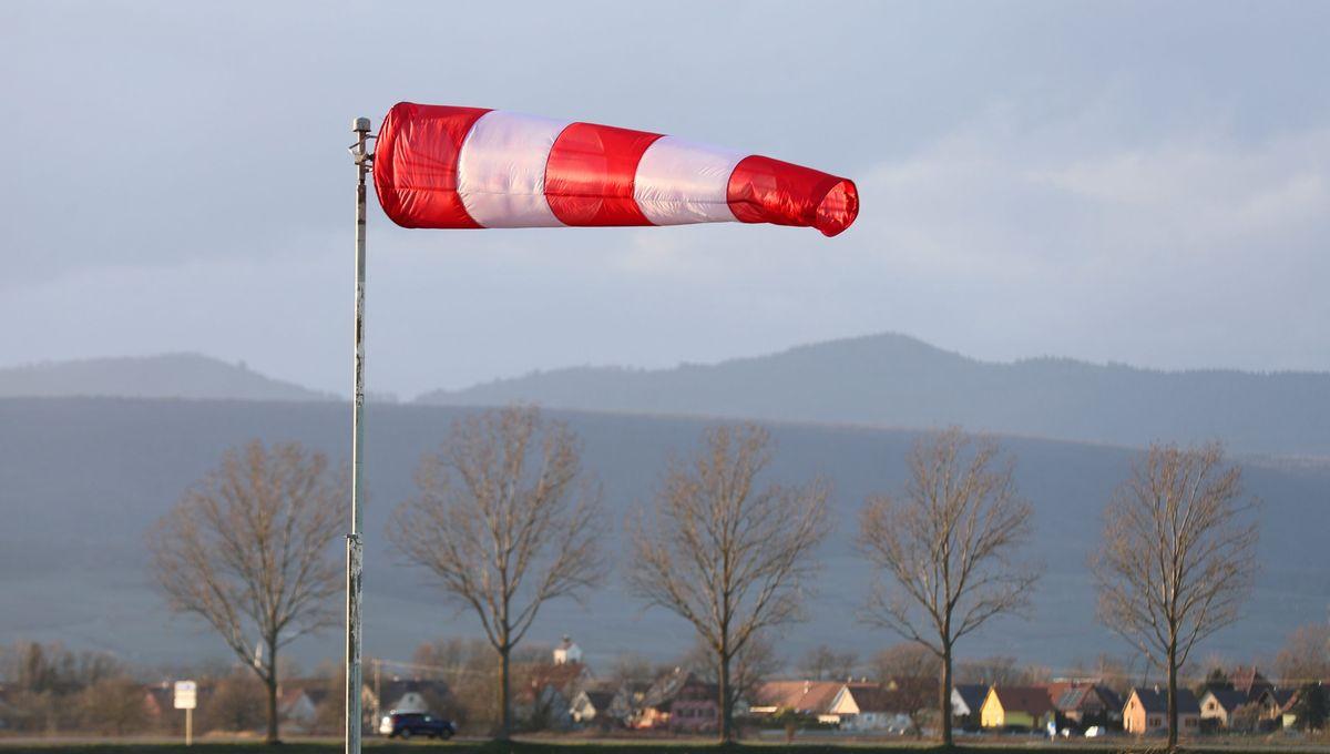 Chutes d'arbres, de branchages et de tuiles : coup de vent samedi sur l'Alsace
