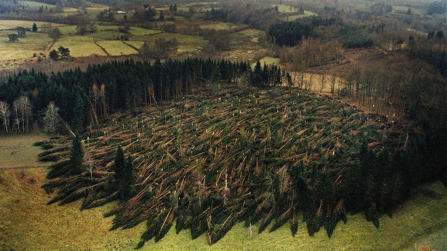 Lors de la tempête de 1999, certaines parcelles de la forêt limousine ont été entièrement rasées