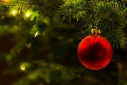 De la graine à la hache, 10 ans avant de devenir un sapins de Noël pour notre plus grande joie