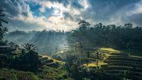 L'Indonésie du musicien Wayan Lotring