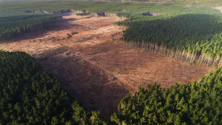 Tous les ans nos forêts progressent en métropole. On dénombre aujourd'hui 16,9 millions d'hectares de forêts sur notre territoire, une surface qui ne cesse d'augmenter.