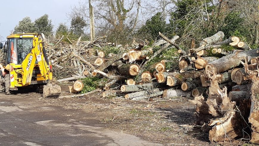Plusieurs arbres, fragilisés par le vent et la pluie ont été abattus et tronçonnés