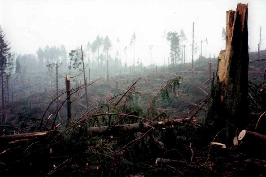 Une forêt dévastée dans le secteur de Châtelus-le-Marcheix.
