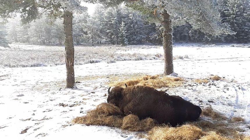 La réserve a été créée en 1991. Le premier pensionnaire du parc animalier fut offert par Lech Walesa à François Mitterrand