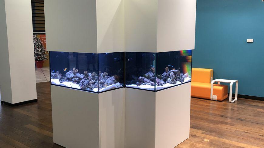 Louer un aquarium thérapeutique