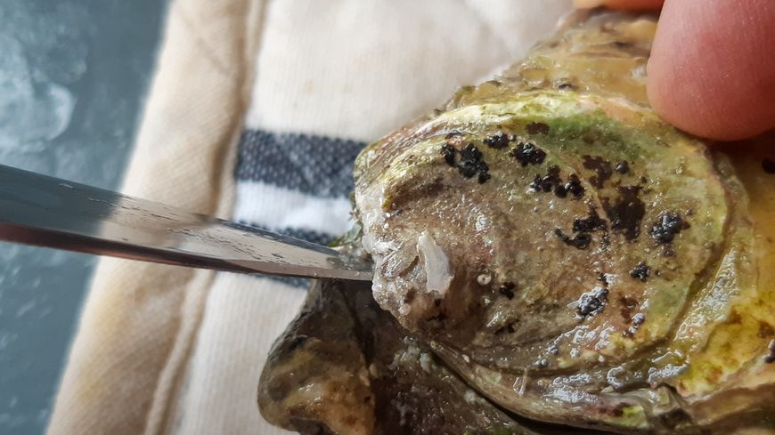 Photo d'illustration - Les coquillages de Vendée sont à leur tour contaminés au norovirus.
