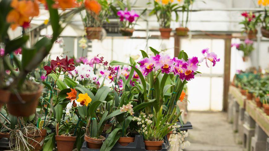 Des orchidées de toutes les couleurs !
