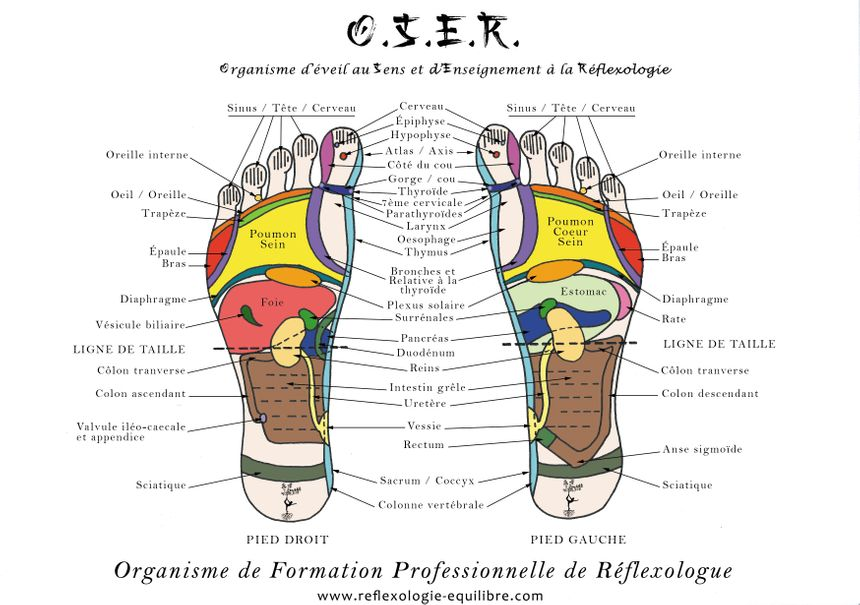 Cartographie réflexologie OSER