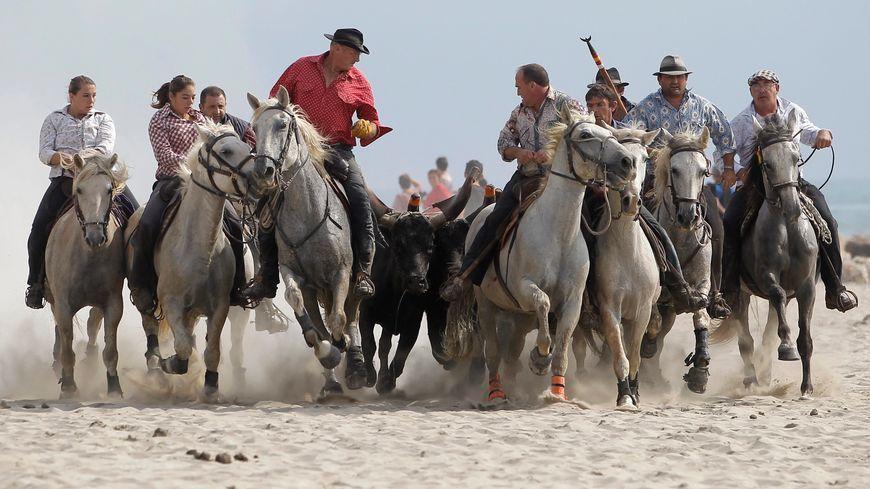 Manadiers et toro lors d'un abrivado sur la plage de Palavas-Les-Flots
