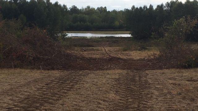 Zones humides dans les bois de Latingy à Mardié sur le tracé de la déviation de Jargeau dans le Loiret
