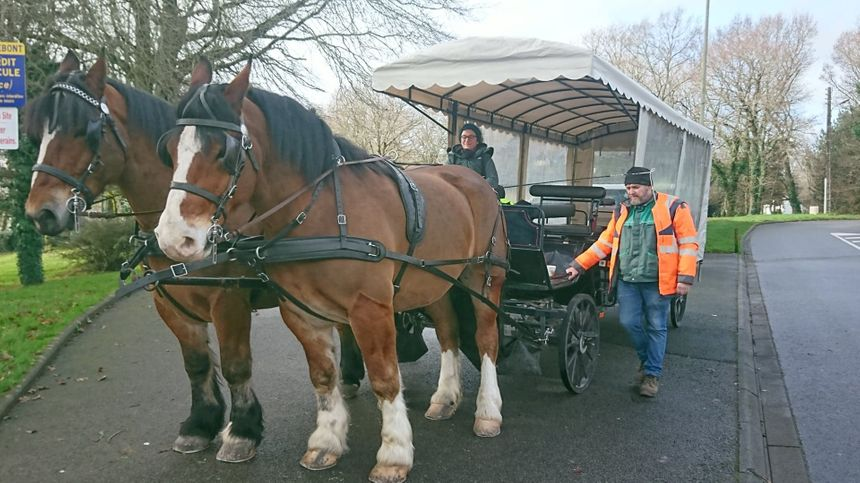 La calèche est tirée par Dispar et Circus, deux chevaux de trait bretons