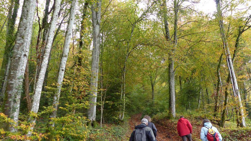 L'association Forêts alternatives du Jura qui regroupe une cinquantaine d'adhérents souhaite gérer la forêt de manière plus écologique. Crédit : Forêts alternatives du Jura.