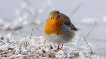 La LPO organise un week-end de comptage des oiseaux de jardin.