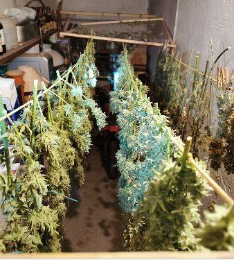 Du Cannabis chez un habitant de Roquemaure