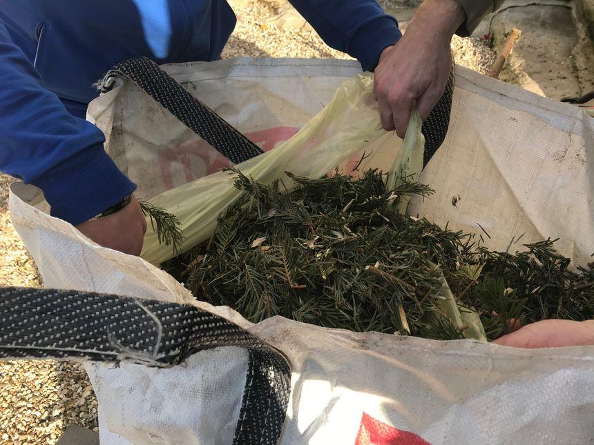 Les sapins broyés donnent du paillis, utile pour les jardiniers