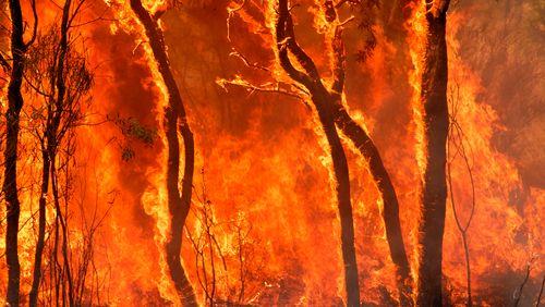 La finance au secours de la planète qui brûle