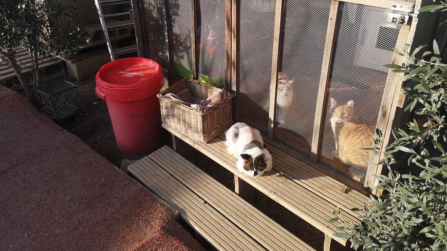 350 bêtes sont accueillies actuellement par l'association Les chats libres de Béziers