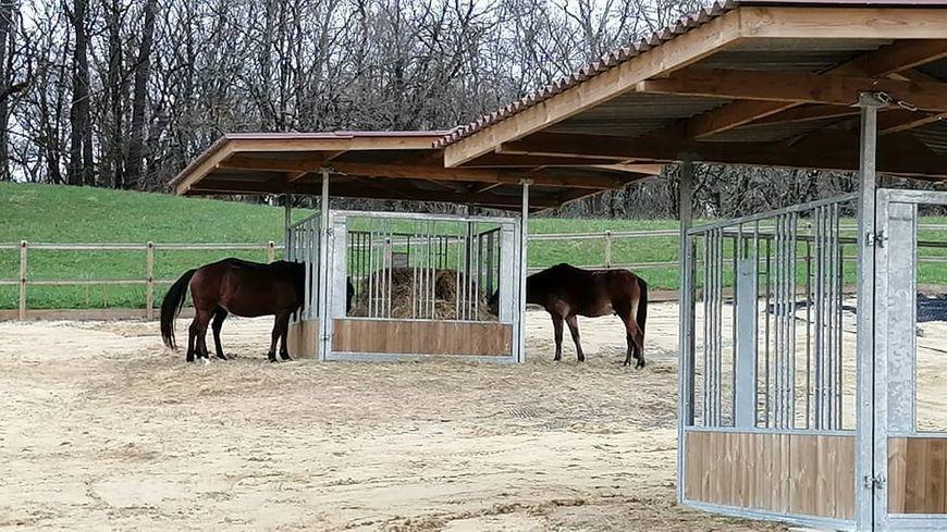Les chevaux en pension sont nourris en continu