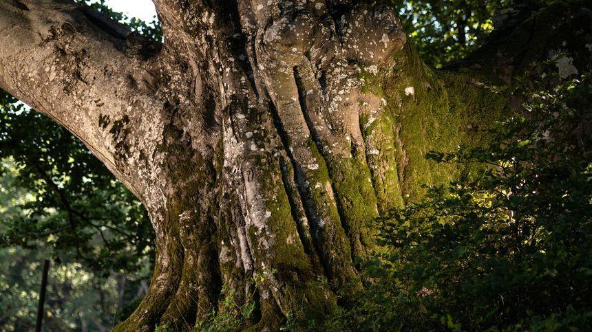 L'arbre du Tarn photographié par Emmanuel Boitier de Terres Sauvages.