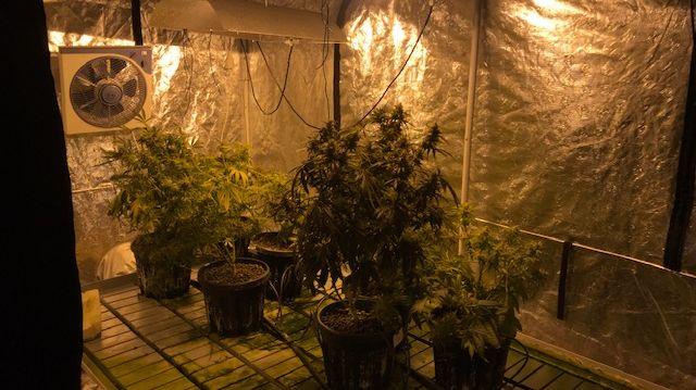 """Une """"chambre de culture"""" de cannabis, à Roquemaure"""