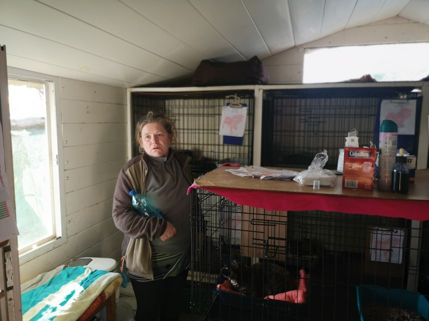 Ici, c'est une partie de notre infirmerie explique Nathalie Chartrain, la présidente de l'association Les chats libres de Béziers