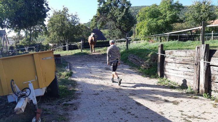 Le cheval Sésame est installé dans une parcelle de huit ares.