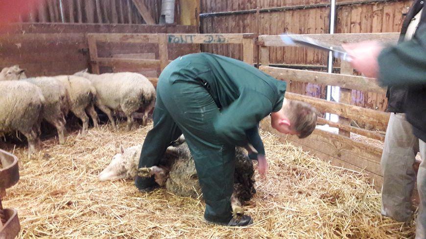 Un jeune berger à l'oeuvre
