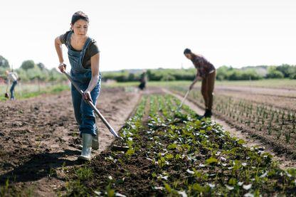 L'agriculture biologique en tant que résultat