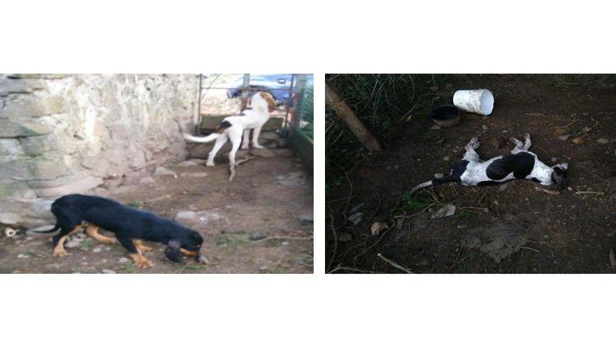 L'un des chiens est mort, les deux autres ont été retrouvés amaigris et affamés.