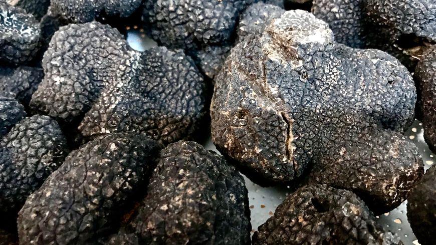 Malgré un début de saison difficile, il y aura au moins cent kilos de truffes en vente à la fête de Saint-Géniès-des-mourgues