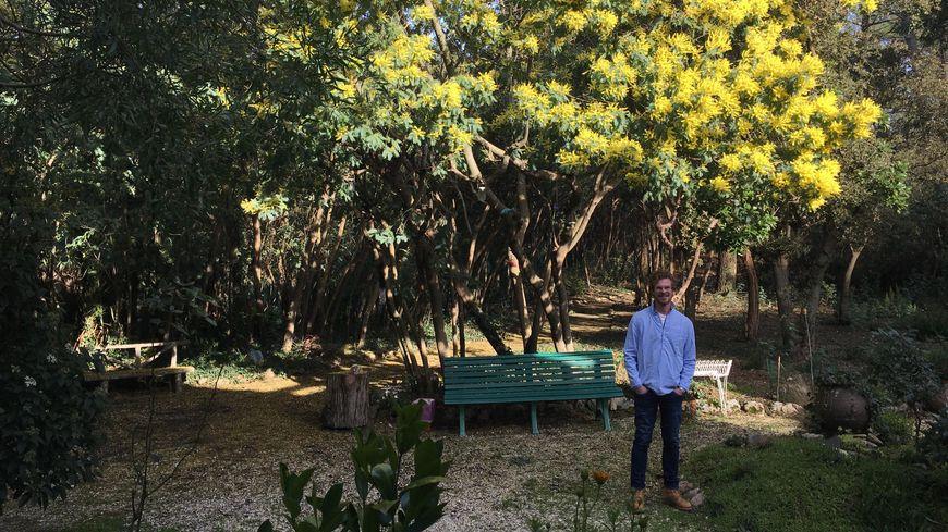 Jérôme est un habitant gâté par la nature : il a dans son jardin une cinquantaine de mimosas en fleurs en cette fin janvier.