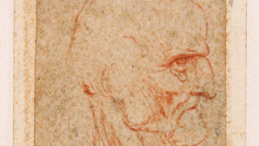 """L'un des chef d'oeuvre de Léonard de Vinci possédé par le musée Bonnat-Helleu """"tête de vieillard de profil à droite"""""""