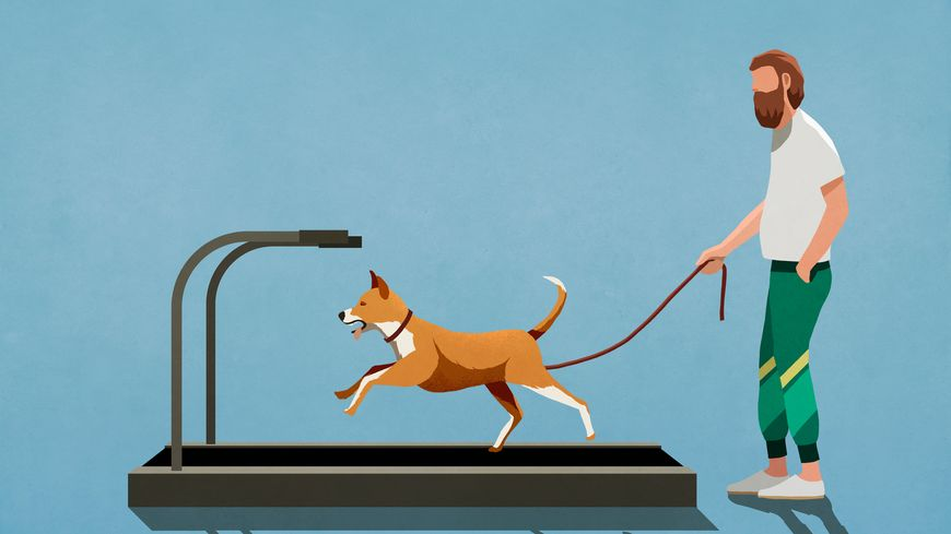 Man with leash watching dog running on treadmill - Illustrations