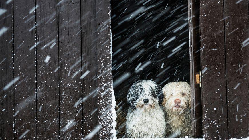 BRRR ... rude hiver !