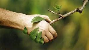 La Naturopathie : c'est quoi ?