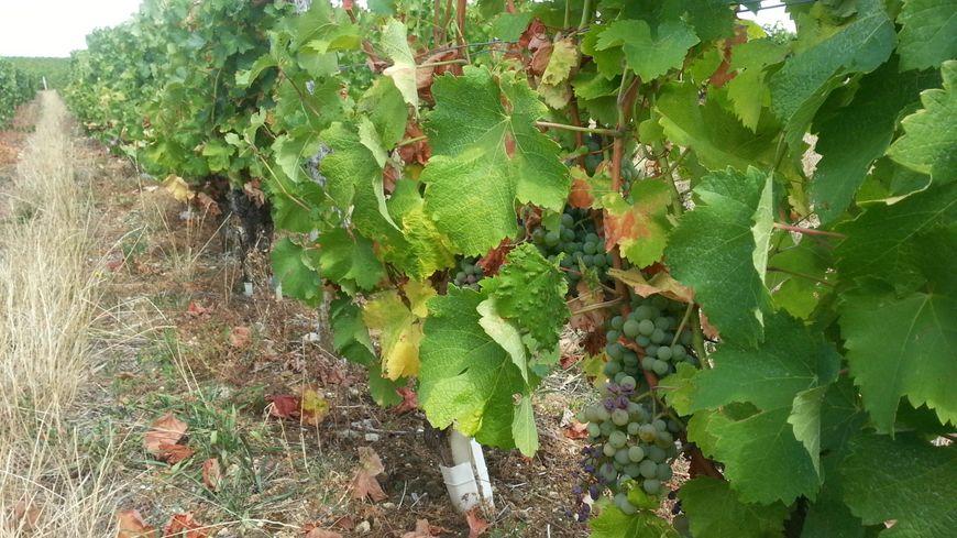 Le Royaume-Uni est le 2eme marché pour les vignobles du Centre Loire