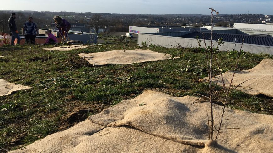 350 arbres ont été plantés sur le talus derrière le cabaret d'Azé.