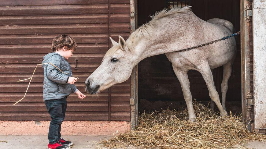 La thérapie par le contact avec les chevaux